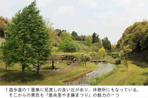 藤園一望 2