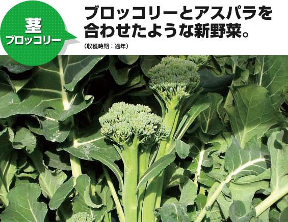 茎ブロッコリー ブロッコリーとアスパラを合わせたような新野菜。