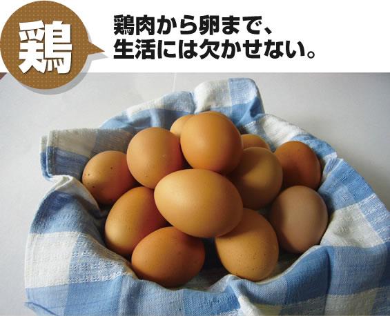 鶏 鶏肉から卵まで、生活には欠かせない。