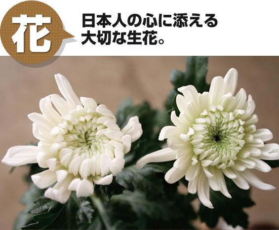 花 日本人の心に添える大切な生花。