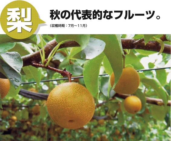梨 秋の代表的なフルーツ。