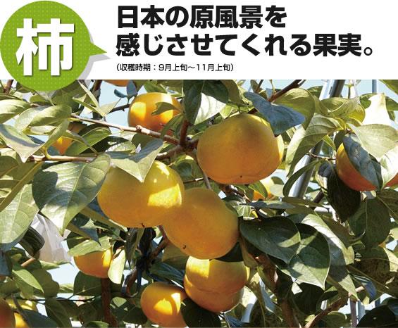 柿 日本の原風景を感じさせてくれる果実。