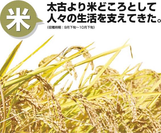 米 太古より米どころとして人々の生活を支えてきた。