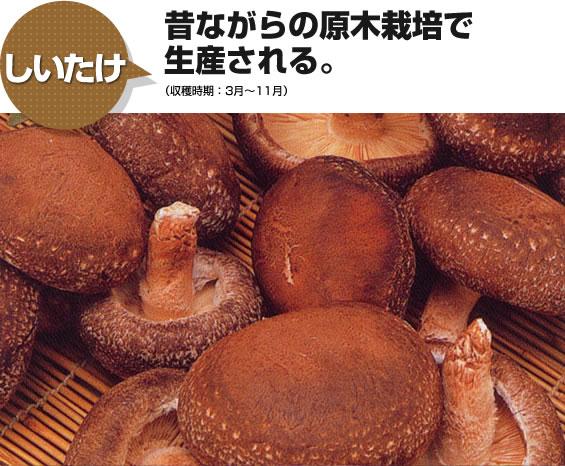 しいたけ 昔ながらの原木栽培で生産される。