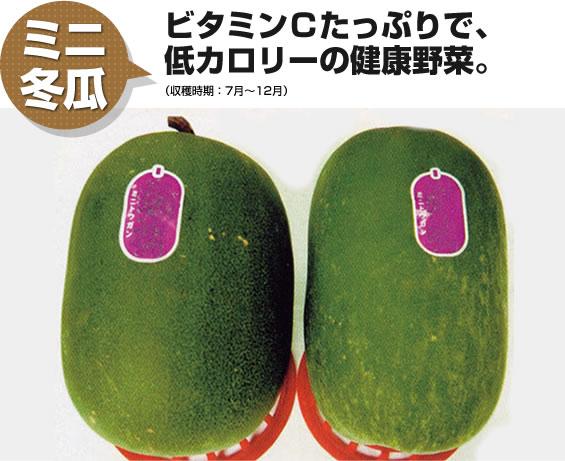 ミニ冬瓜 ビタミンCたっぷりで低カロリーの健康野菜。