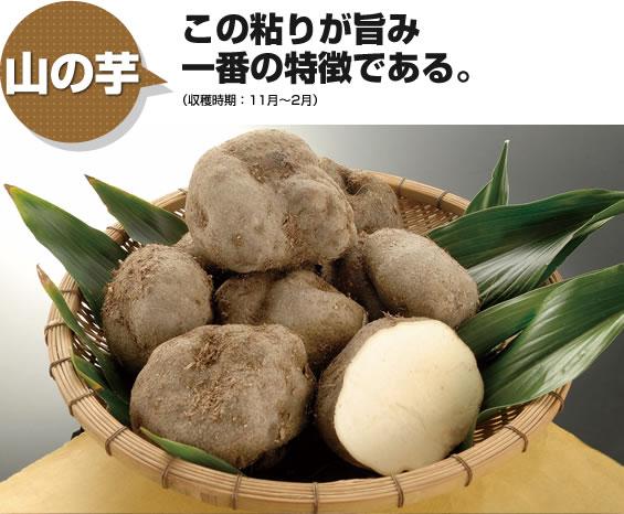山の芋 この粘りが旨み一番の特徴である。
