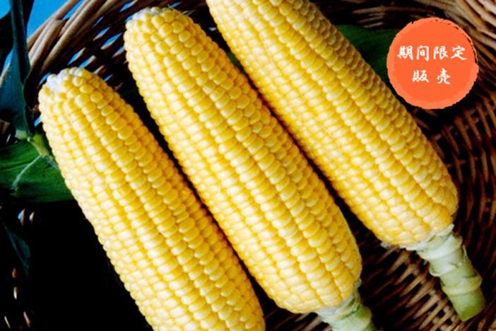 pikunikku-corn2